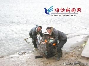 援杨渔业与潍坊峡山水库开库合作,捕捞30天 渔业产值达3035.76万