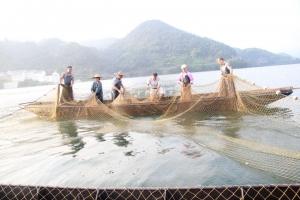 湖泊捕捞队