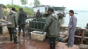 江苏专业水库捕捞队