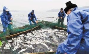 陕西专业水库捕捞