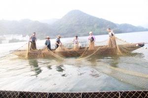 水库捕捞销售